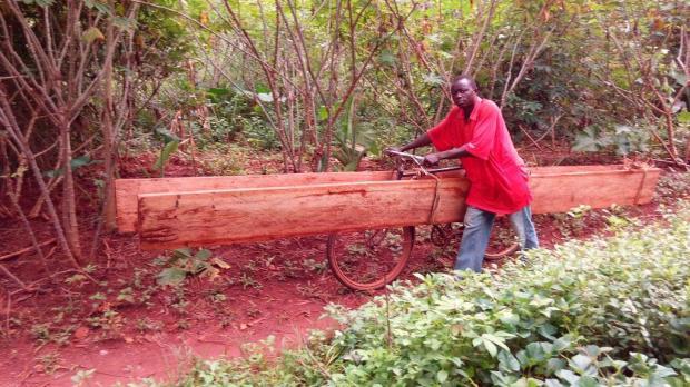 Transport des planches de la brousse vers l'école
