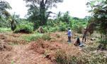 Mesure et défrichage de la forêt