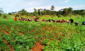 Le champ de soja pousse et est bien entretenu par les élèves