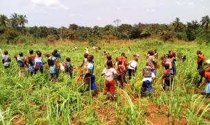Les élèves de primaires récoltent le soja