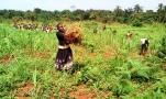 Récolte de soja Cette fille va entreposer les produits