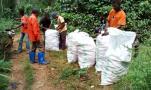 Remplissage des sacs de maïs