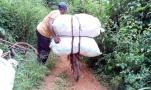 Transport des maïs